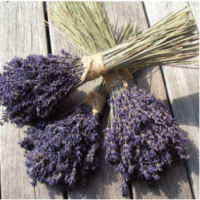 andrea-rogers-lavender.png