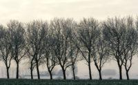 Belgian Trees